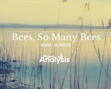 Bees, So Many Bees by Anna Jackson